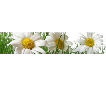 Фартук - белые ромашки в траве на белом фоне