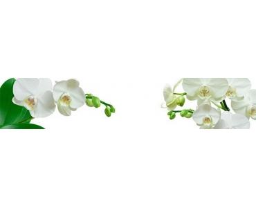 Фартук - белые орхидеи на белом фоне