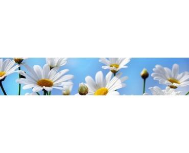 Фартук - белые ромашки на фоне голубого неба